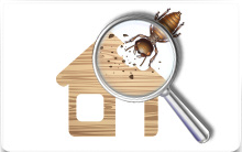 Importance Of Timber Pest Inspection