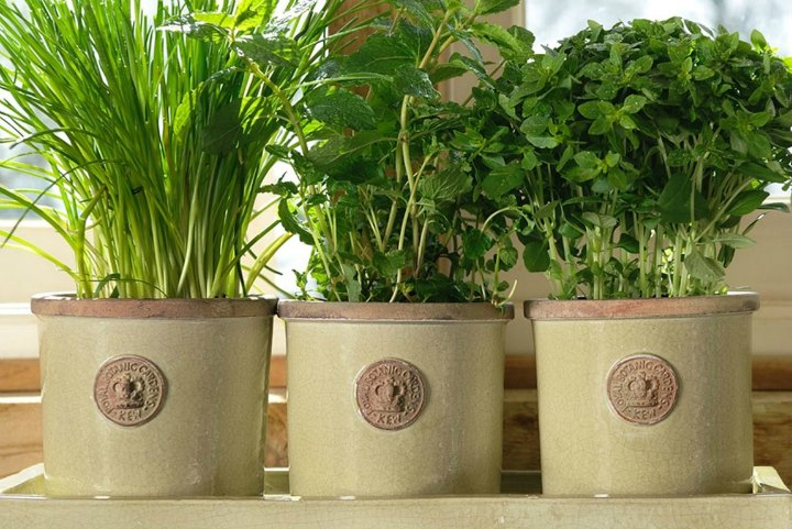 Kew-Round-Herb-Pots