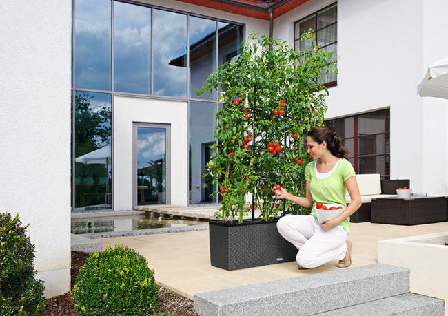 Self-Watering HDPE Planters